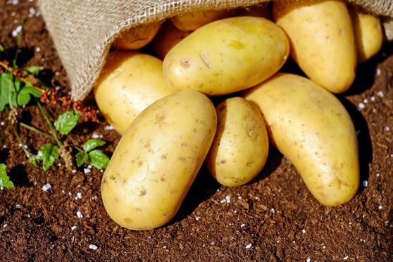 potatoes1585075_1920_558